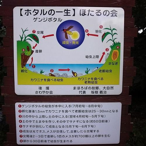 <磯川緑地公園>ちょいと散策⑪