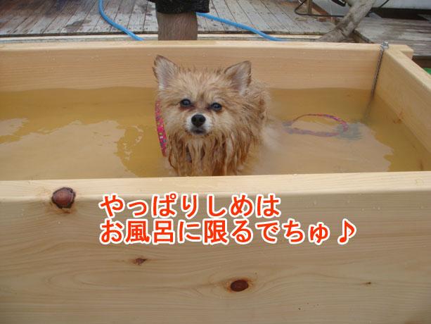 07_13_32.jpg