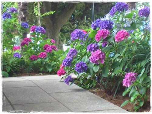 紫陽花、薔薇、百合の洋館めぐり