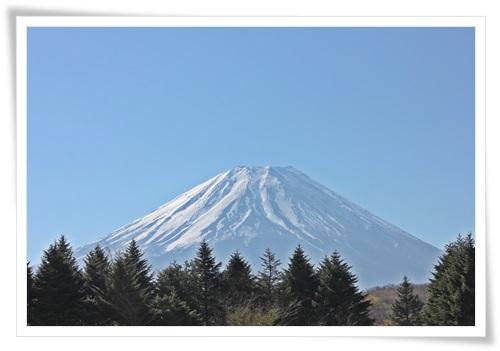 富士山と芝桜1