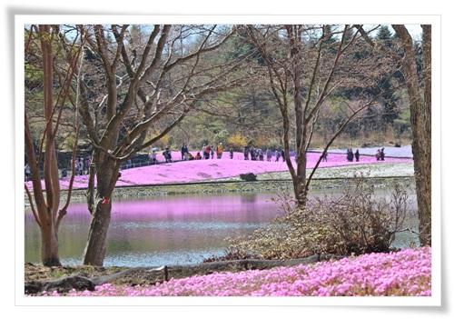 富士山と芝桜2