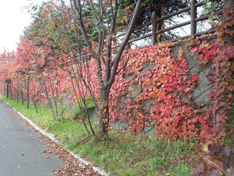 fc2_2013-10-25_08-47-36-596.jpg