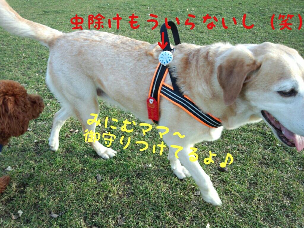 fc2_2013-11-15_22-43-59-203.jpg